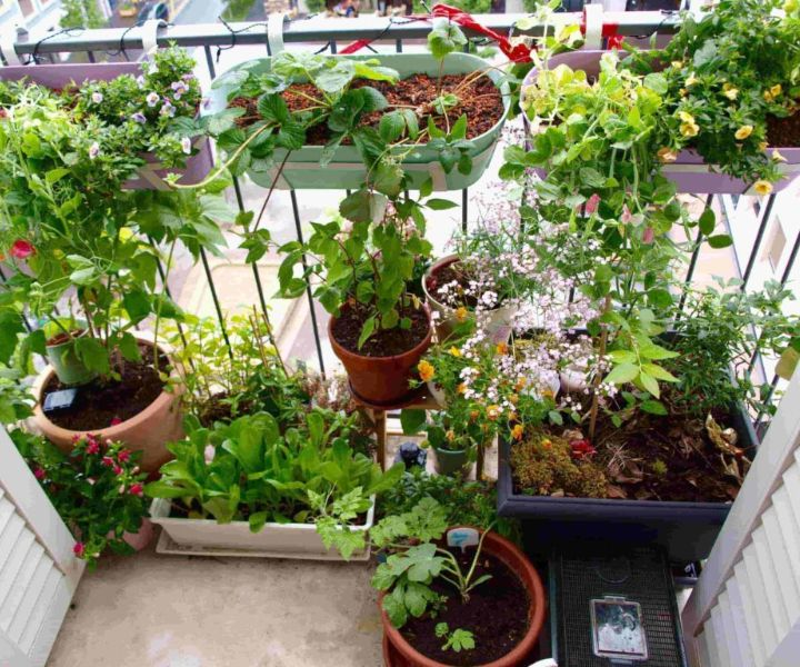 terrace gardening ideas with pictures