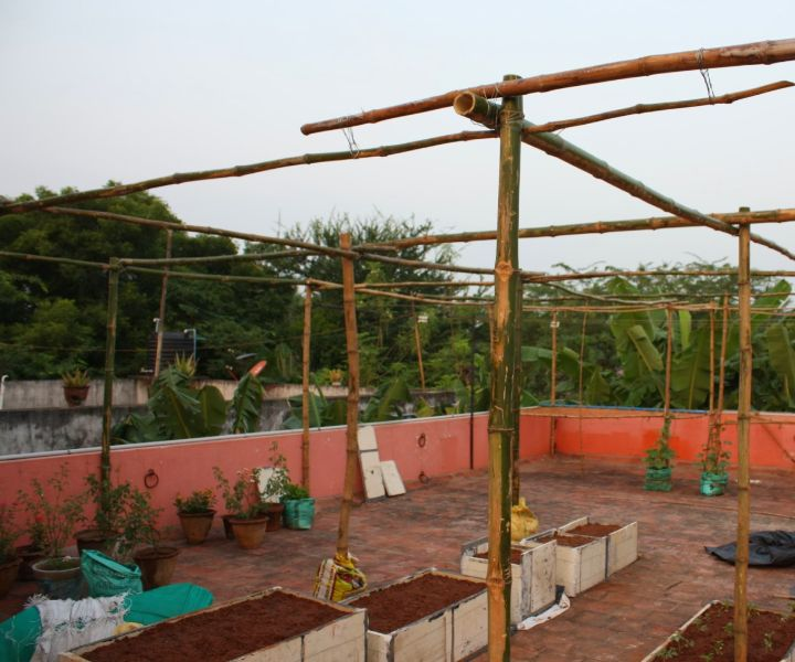 terrace gardening in chennai