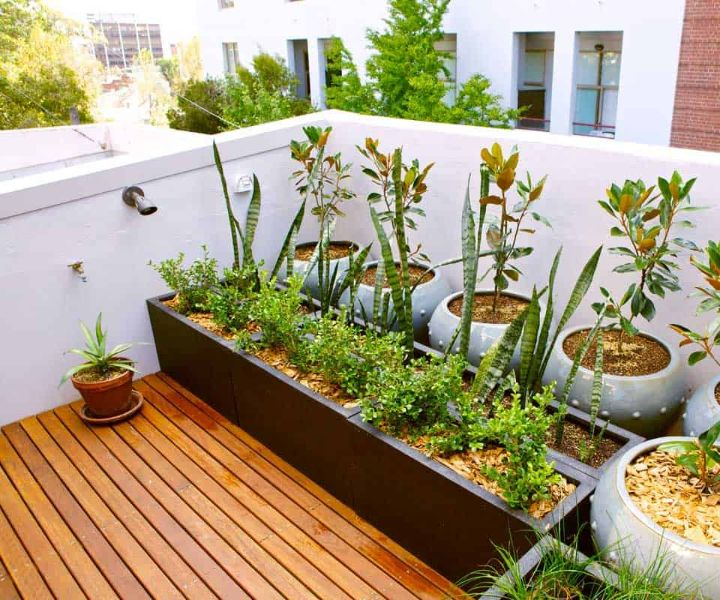 terrace gardening pdf