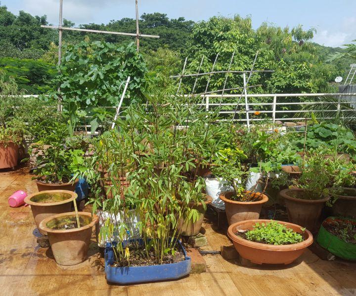 terrace gardening pictures