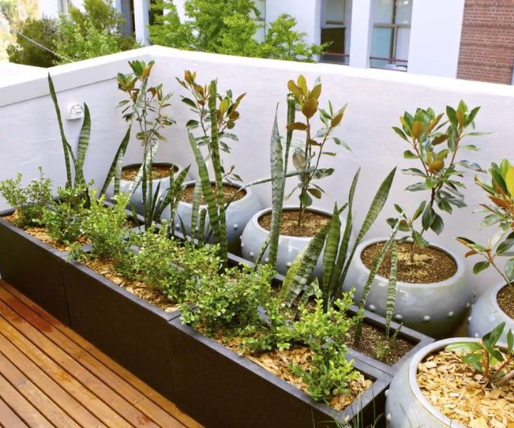 terrace gardening pots