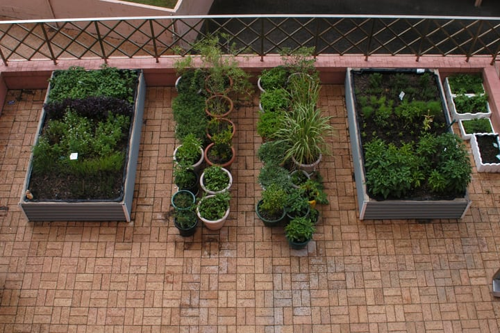 terrace herb garden on tiny planters