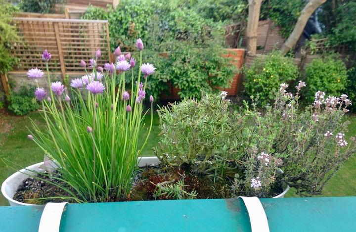 terrace herb pot