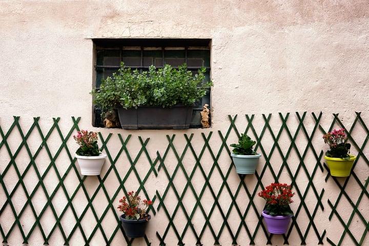 trellis plant wall