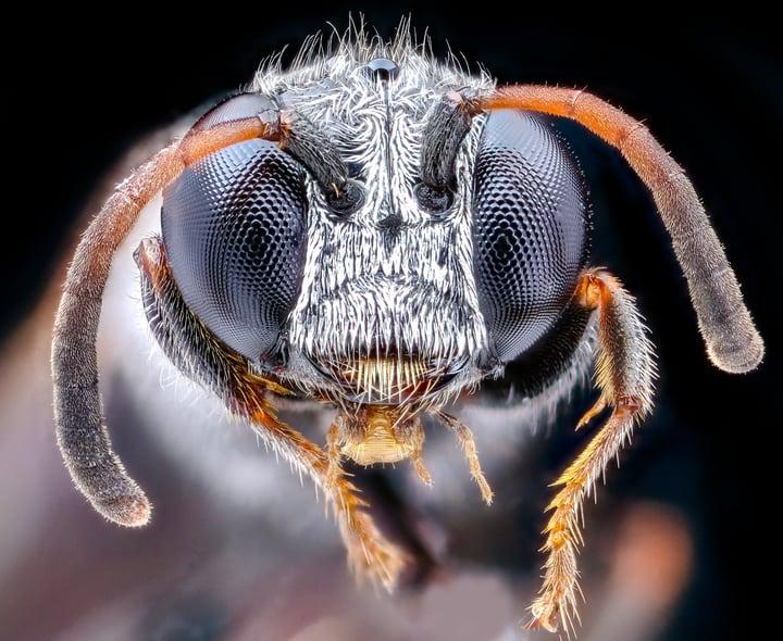 wasp hair