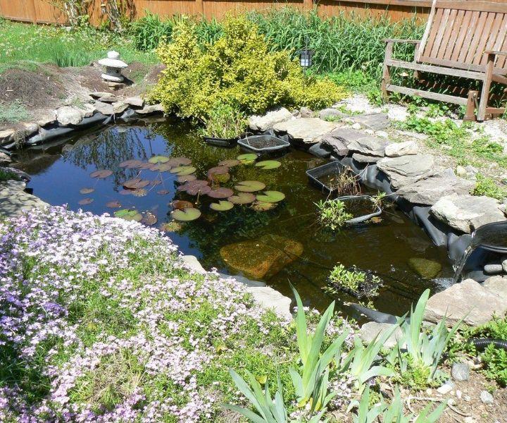 water gardening plants