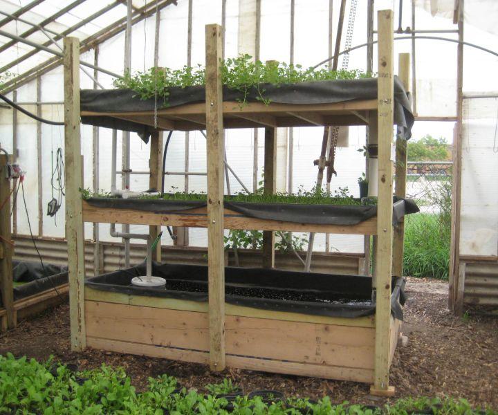 water gardening tips