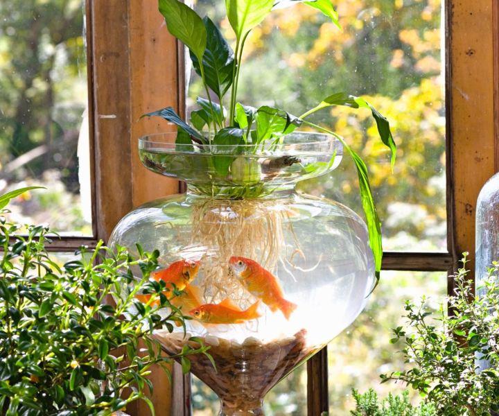 water retention gardening