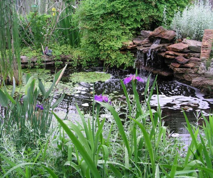 what is water gardening