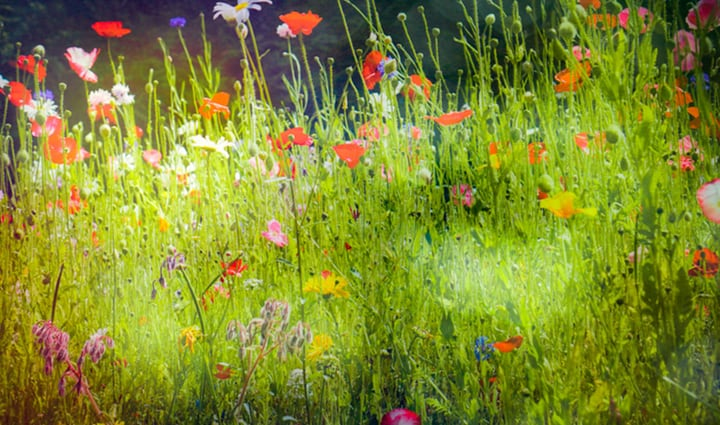 wild flower garden for bees