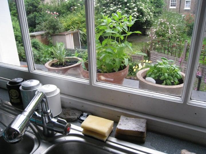 window herb garden in the kitchen sink