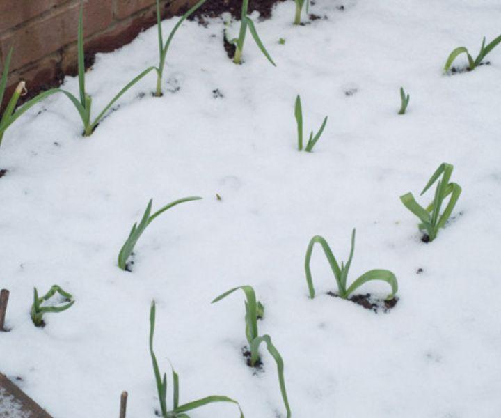 winter gardening book