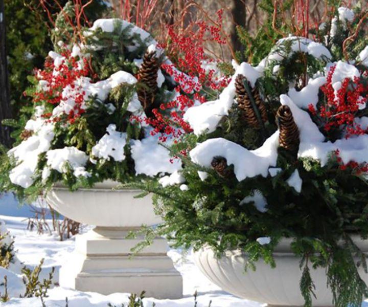 winter gardening colorado
