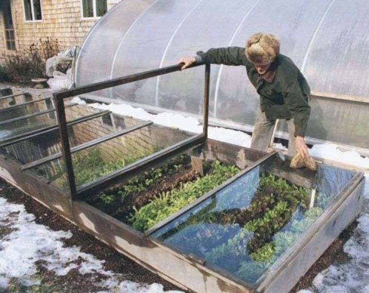 winter gardening greenhouse