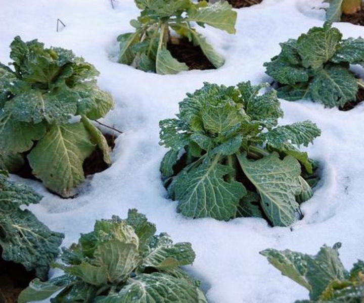winter gardening in georgia