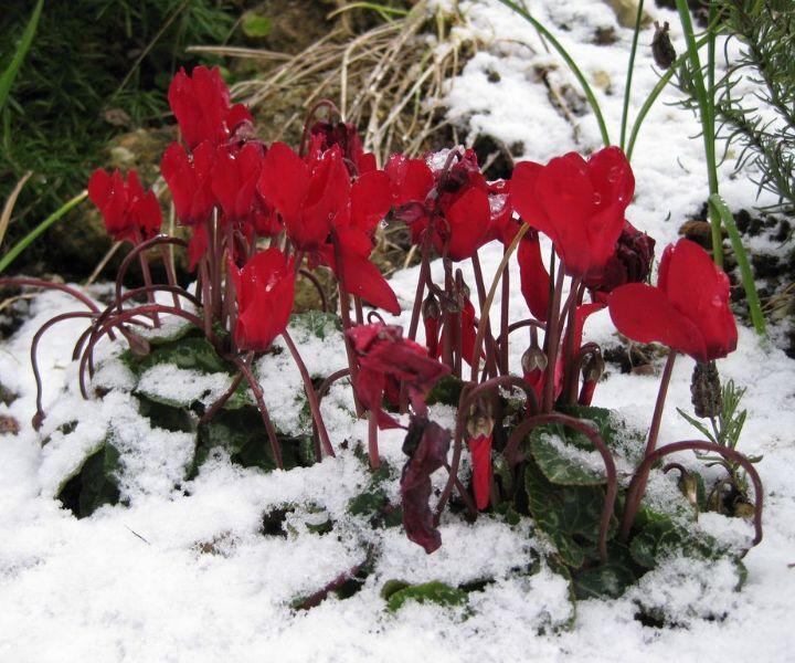 winter gardening in the pacific northwest