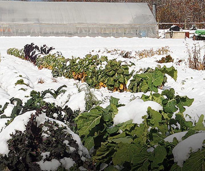 winter gardening north carolina