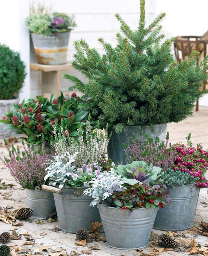 winter gardening plants