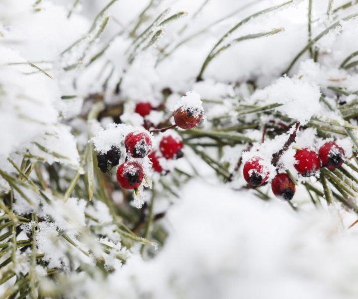 winter gardening texas