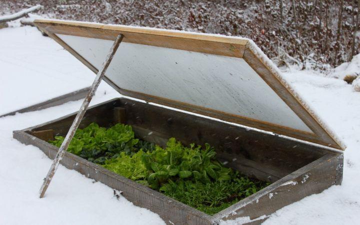 winter gardening vegetables