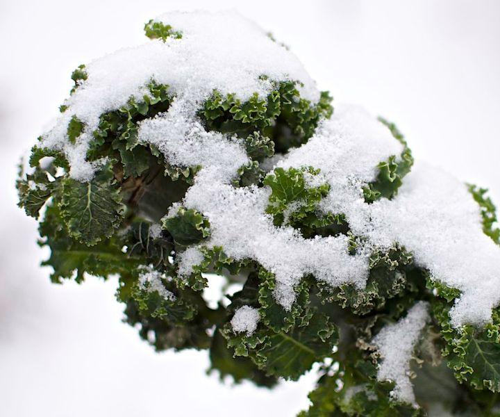 winter gardening zone
