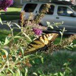 butterfly garden in direct sunlight
