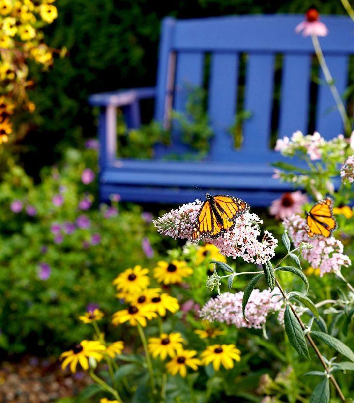 butterfly garden plans