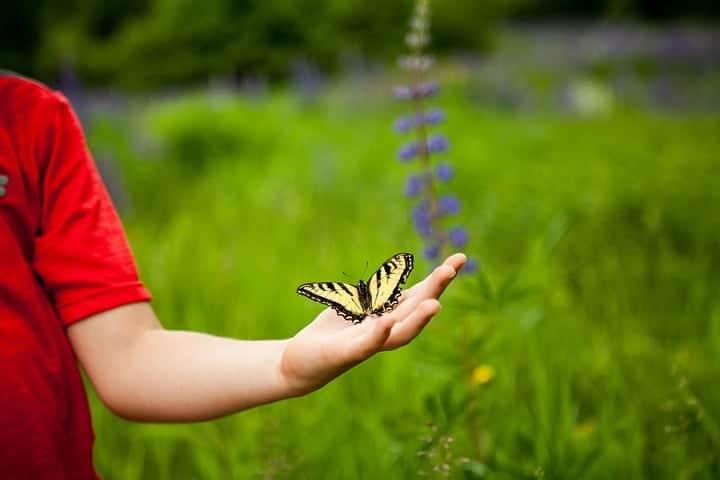 butterfly on kids palm