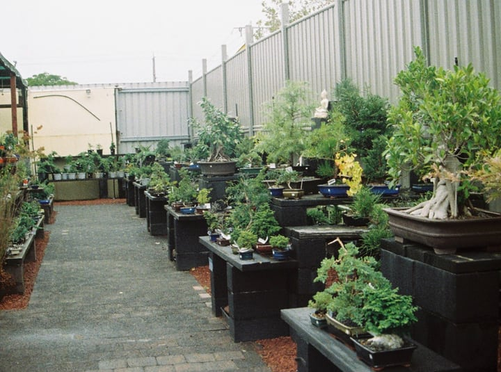 buy plants for terrace garden
