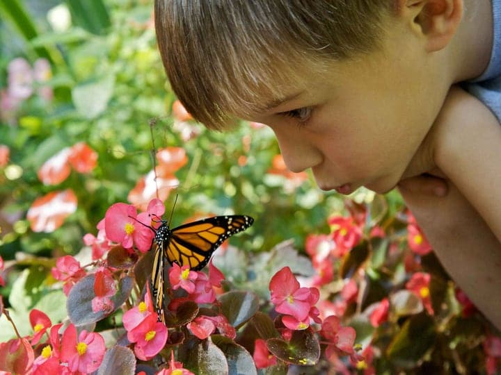 curious boy child with a butterfly