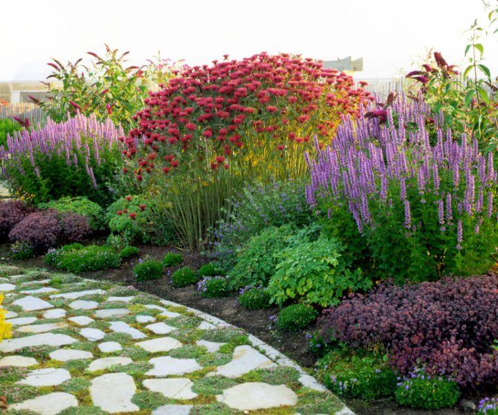 flowers for butterfly garden