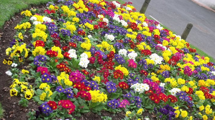 flowers in a garden bed