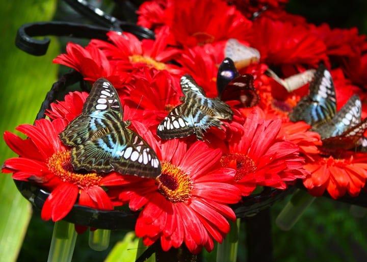 garden filled with butterflies