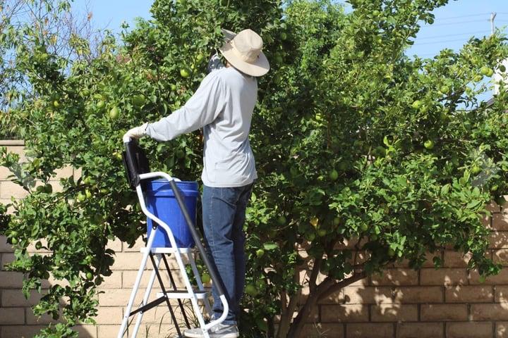 garden step ladder