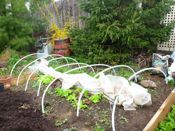 hoop tunnel for winter garden
