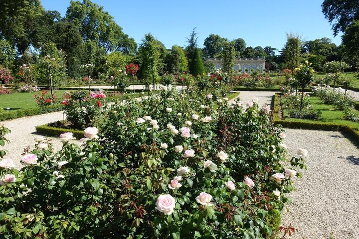 huge rose flower garden