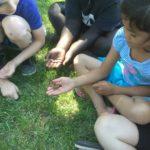 kids learning about butterflies