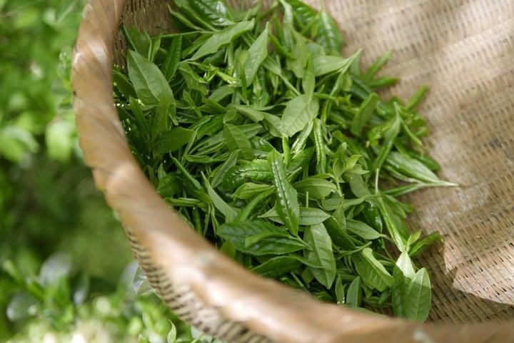 matcha green tea leaves
