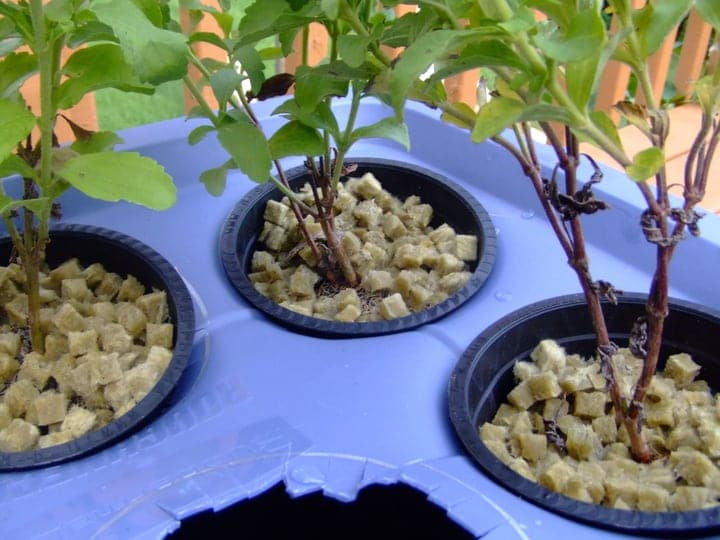 mini hydroponic system in a water garden