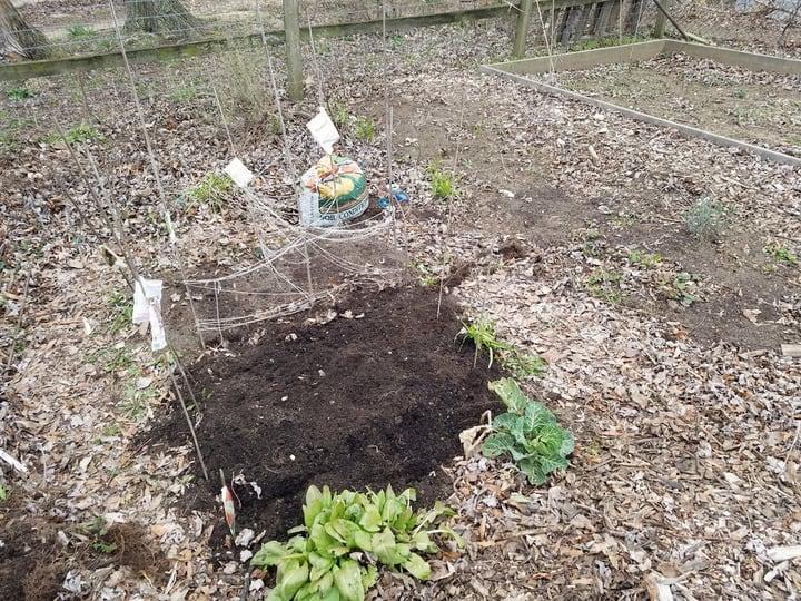 mulched winter garden