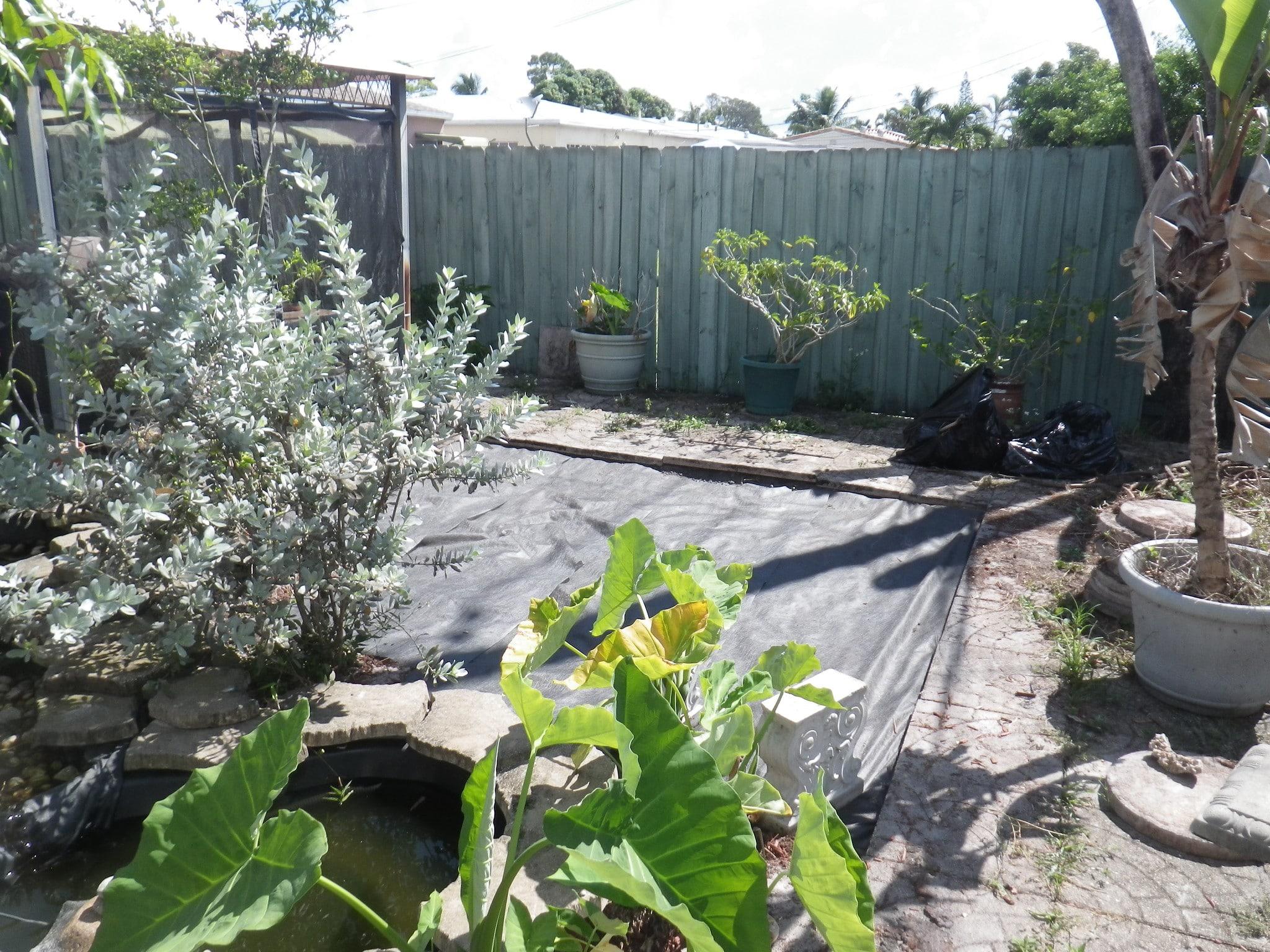 planting local vegetation