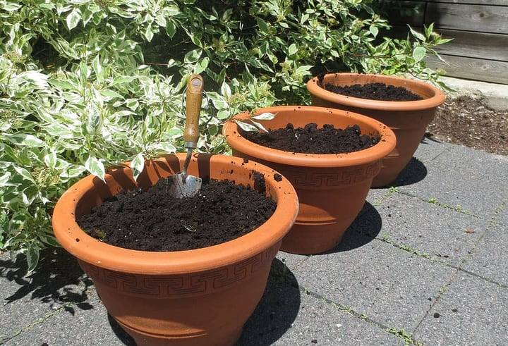 planting seeds on terrace garden