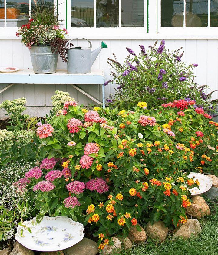 plants for butterfly garden