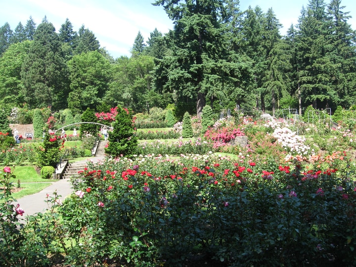 portland rose garden