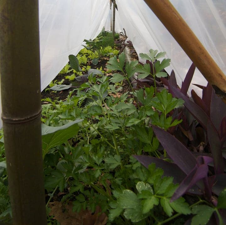 protected plants in a winter garden