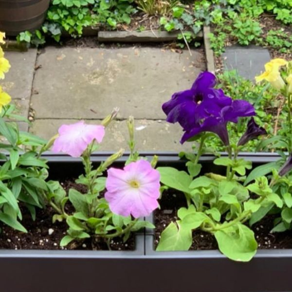 rectangular self watering planter with flowers