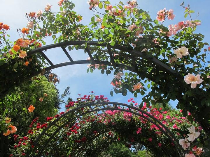 rose arch garden
