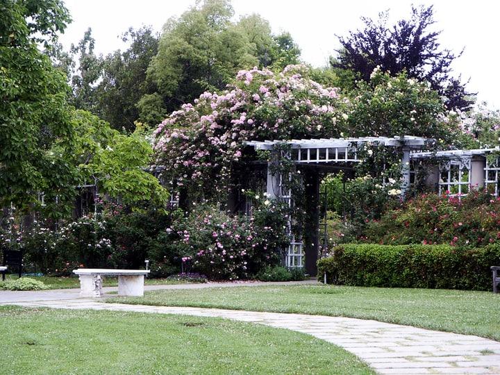 rose garden arbor