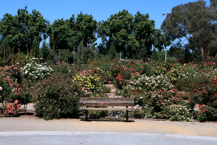 rose garden san jose