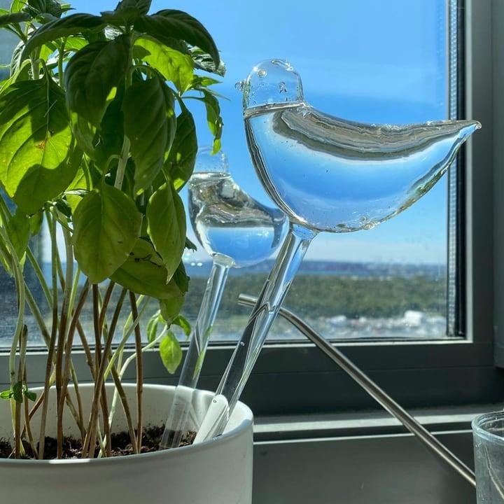 self watering globes